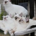 Daimond,Corday,Dulce ja Desiree