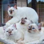 Daimond,Corday,Dulce&Desiree
