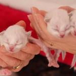 F-kittens