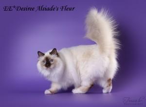 Desiree Alsiade's Fleur